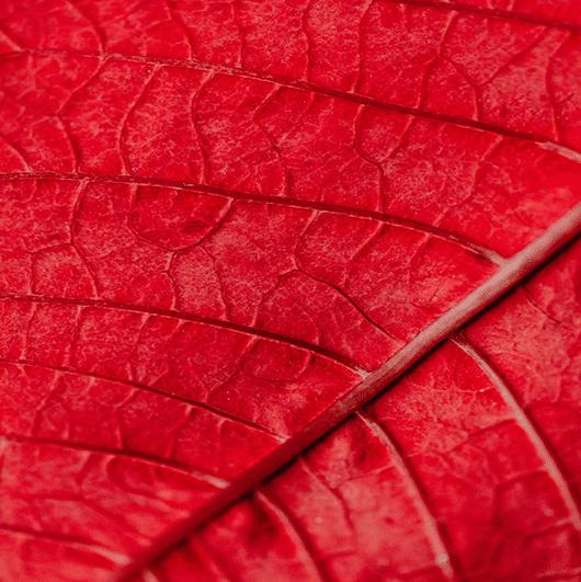 roodheid_web2